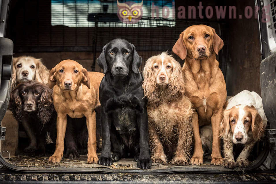 I vincitori del concorso Dog Photographer of the Year 2018